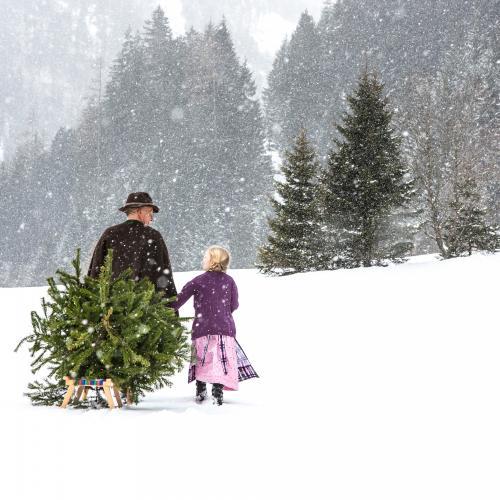 Nonni e nipotina camminano sulla neve e tornano a casa con l'albero da addobbare sulla slitta