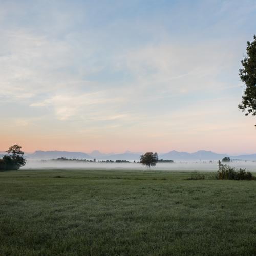 Ibmer Moor, Oberösterreich